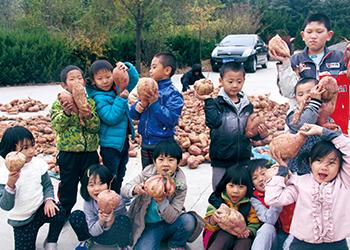 明珠国学 甜美童年 收获有机地瓜